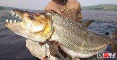 史上最恐怖的鱼类:虎鱼口大牙齿锋利(至少吃了500人)