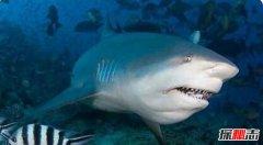 世界十大最恐怖鲨鱼 大白鲨仅第3第1凶猛无比