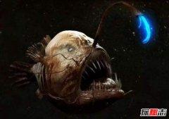 """海洋十大""""鬼鱼"""" 每一种都丑陋无比令人望而生畏"""