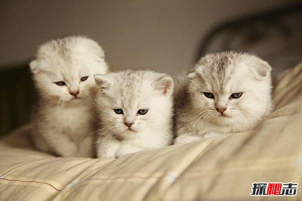 养猫其实是猫选择主人图片