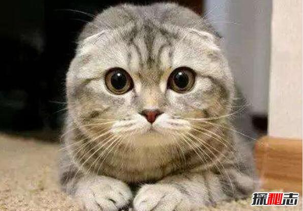 猫喜欢靠近有灵气的人图片