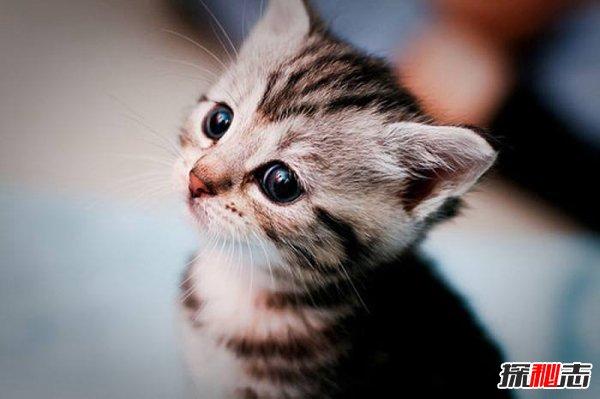 养猫不要养下面5种猫图片