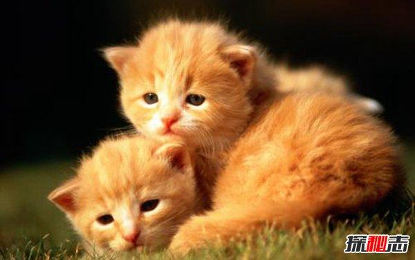 猫是招鬼还是辟邪的图片