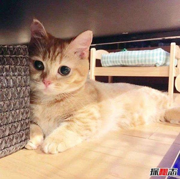 磁力猫新域名是好多图片