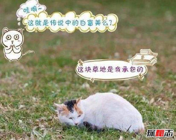 养猫的好处和坏处图片