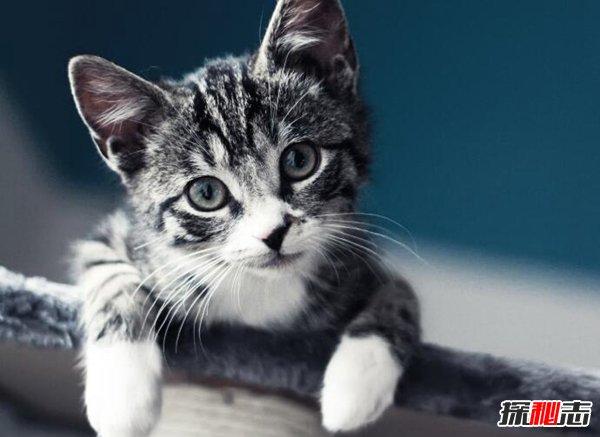 养猫对女生妇科的危害图片
