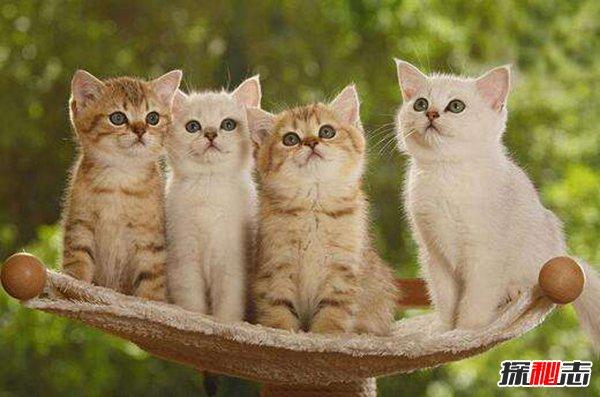 磁力猫最新版地址链接图片