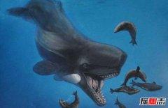 海洋最强霸主:梅尔维尔鲸长17米重65吨(所向披靡)