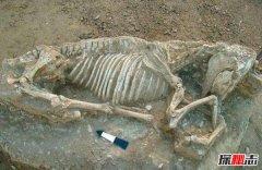 秦始皇祖母陵惊现一物 确认为已灭绝新物种遗骸