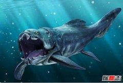 泥盆纪十大恐怖生物 邓氏鱼顶级掠食者鲨鱼都害怕