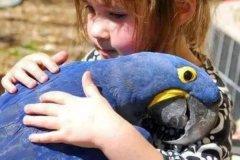 紫蓝金刚鹦鹉:世界上最大的鹦鹉(通体蓝色/体长1米)