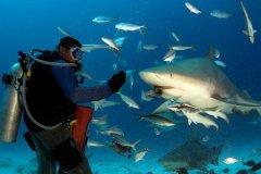 成都海洋馆鲨鱼吃人?潜水员腿上有拳头大窟窿(心惊肉跳)