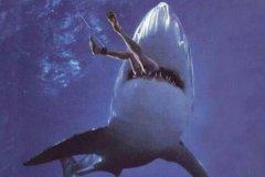 1993深圳鲨鱼吃人事件揭秘:男子消失防鲨网外(仅剩泳圈)