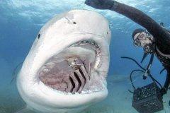 深圳大梅沙鲨鱼咬人真的假的?一男子在防鲨网外消失无踪