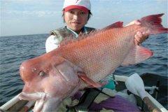 美丽突额隆头鱼:喜欢生活在水深100M的位置(寿命很长)