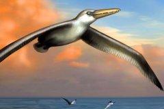 史前最大的鸟:桑氏伪齿鸟,翼展7.4米重80斤(乘风而起)
