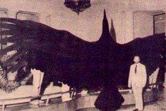 史前第二大鸟:阿根廷巨鹰,翼展7m高1.5m(吃动物尸体)
