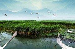 湿地的生态功能:8大功能地球之肾,天然净化器(调蓄洪水)