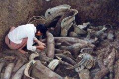 三星堆出土女尸:4500年前女性遗骸,身份不明(腐烂不堪)