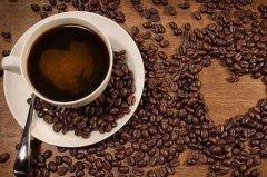 猫屎咖啡收集自哪种猫的排泄物:苏门答腊岛的麝香猫