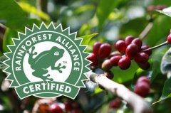 十大最好的咖啡豆:中国仅有一种咖啡豆上榜(云南咖啡豆)