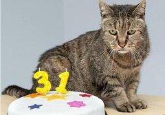 世界上寿命最长的猫:来自美国的Cream Puff,活了38年零3天