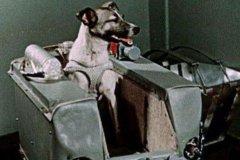 第一个被送入太空的动物是什么?是一只名叫莱卡的狗狗