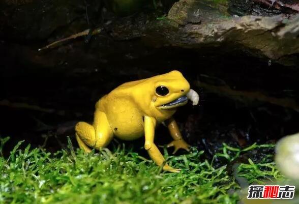 亀蛇蛙塑像瓷陶罐