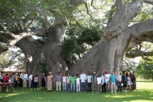 世界上最粗的树有多粗,百骑大栗树(直径18米/树围55米)