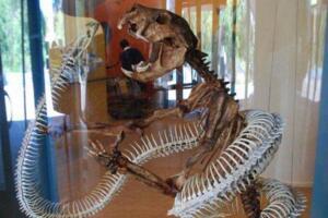 远古沃那比蛇是什么蛇,比泰坦蟒更凶的6米巨蛇(能吃恐龙)