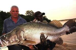 淡水巨怪尼罗河鲈鱼,无所不吃灭绝一方(长2米重400斤)