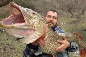 15米巨型哲罗鲑,被当成喀纳斯湖水怪的大红鱼(图片)