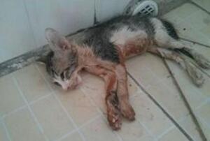 微波炉虐猫事件视频,嫌吵将猫放进微波炉15分钟活活烧死