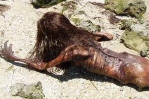 黑鳞鲛人活着的样子真恐怖,黑鳞鲛人被美国抓获还是活的