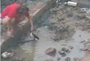 北京男女水坑虐猫事件,多次举起猫往水坑里摔(残忍至极)