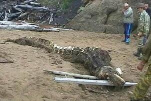 1998年大洪水出现龙尸是真的吗?98年洪水冲出龙尸图片