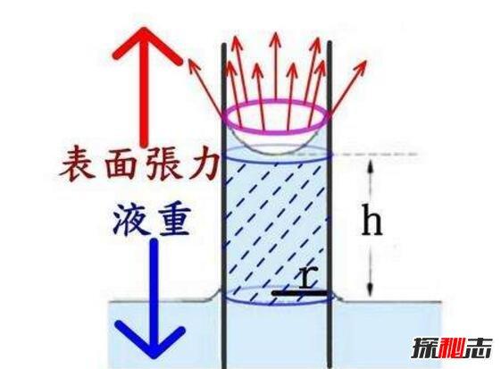 揭秘立筷子的科學解釋,實則物理中的一種毛細現象