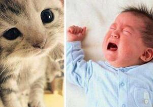 猫叫综合症的临床表现是什么?猫叫综合症能活多久
