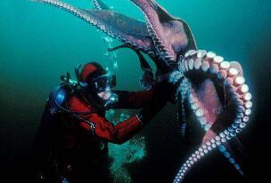 海底一万米有哪些生物?海底一万米恐怖生物图片曝光