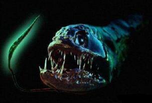 盘点十大深海未知巨型恐怖生物,海底神秘未知生物终曝光