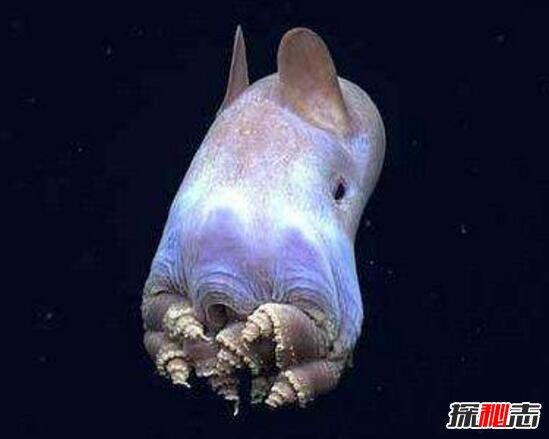 我喜欢的海底动物章鱼图片
