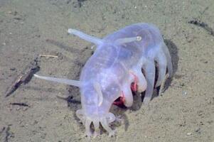 海猪是什么?海猪能吃吗?(最真实的海猪图片曝光)