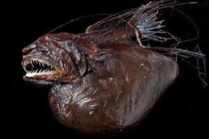 揭秘肯伟岛怪物之谜,神秘五个脚趾怪物(海洋生物鮟鱇鱼)