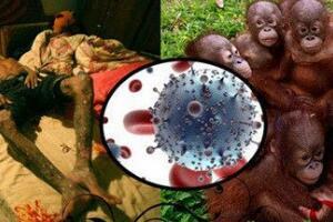 艾滋病的起源与发展解析,起源野生动物黑猩猩(源于非洲)