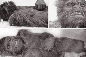 喜马拉雅山雪人遗骸曝光,被证实雪人就是史前未灭绝的熊