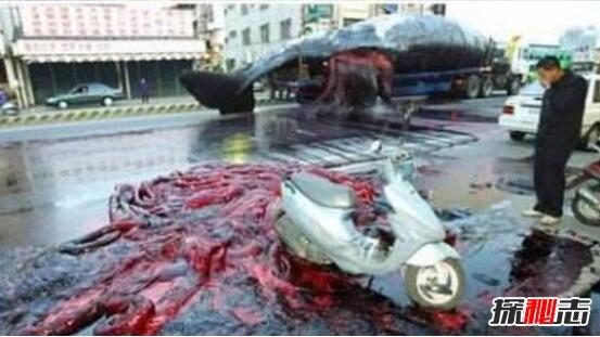 科学揭秘鲸鱼爆炸,炸死生物学家助理 气压过高引发爆炸