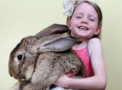 世界上最大的兔子,大流士兔子体长1.2米重达45斤