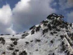 澳大利亚小镇惊现蜘蛛雨,千万蜘蛛从天而降(头皮发麻)