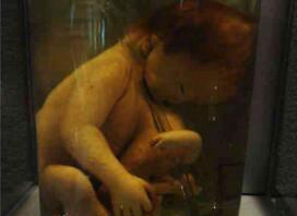 泰国恐怖博物馆,收藏畸形尸体的变态博物馆(信不信由你)